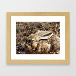 Jackrabbit Framed Art Print