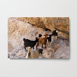 Goats Goat Heard on Rockface Metal Print