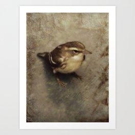 First Fall Female Blackburnian Warbler Art Print