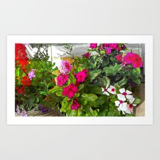Mixed Annuals Art Print