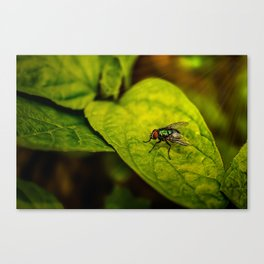 Fly in the green Canvas Print