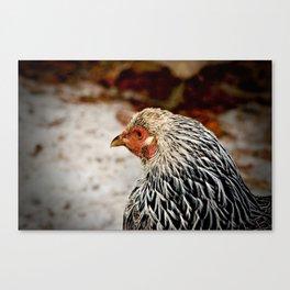 American Wyandotte Chicken Canvas Print