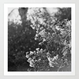 Flowers in Film Art Print
