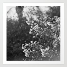 Flowers in Film Art Print