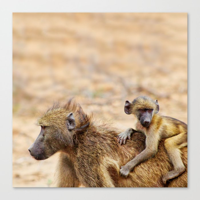 Cute monkey baby and mother Canvas Print