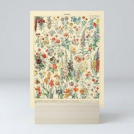 Wildflower Diagram // Fleurs II by Adolphe Millot 19th Century Science Textbook Artwork Mini Art Print