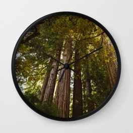 Redwood Forest II Wall Clock