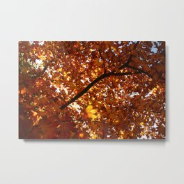 Oregon Fall Metal Print