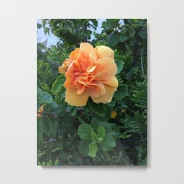 Peachy Flower Metal Print