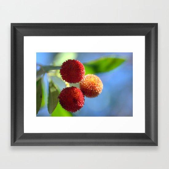 Strawberry tree fruits 8697b Framed Art Print
