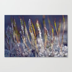Frosted moss 38 Canvas Print