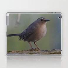 Gray Catbird near Sunrise Laptop & iPad Skin