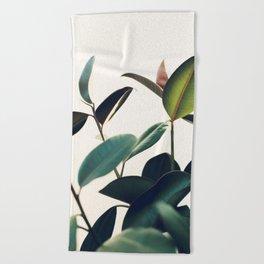 Ficus Elastica #8 Beach Towel