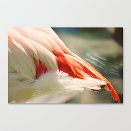 Tail Feathers Canvas Print