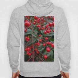 Winter Berries 8x12 Hoody