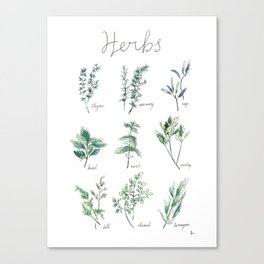Herbs Botanical Illustration Canvas Print
