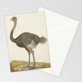 16th Century European Ostrich Stationery Cards