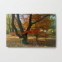 Red autumnal leaves Metal Print