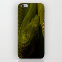 monty python iPhone & iPod Skins featuring basking python by Claes Touber