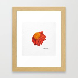 Coneflower Echinacea Framed Art Print
