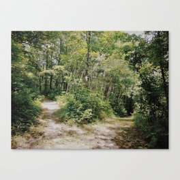 The High Road or The Low Road? Canvas Print