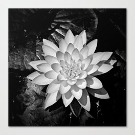 Water Lily in Black and White from Overhead Canvas Print