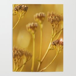 Autumn wildflowers in forest #decor #buyart #society6 Poster