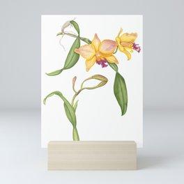 Flowering yellow cattleya orchid plant Mini Art Print