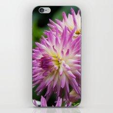 Pink & White Dahlia iPhone Skin