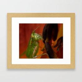 Fork Tailed Bush Katydid Framed Art Print