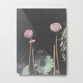 Lotus Seed Heads Metal Print