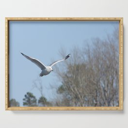 Ring billed gull Serving Tray