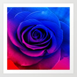 Blue and pink rose Art Print