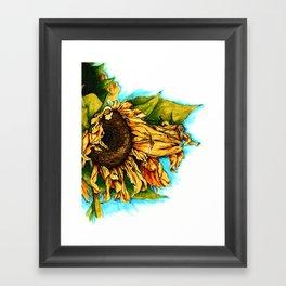 Sunflower in Summer Framed Art Print