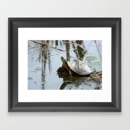 Painted Turtle Reflection Framed Art Print