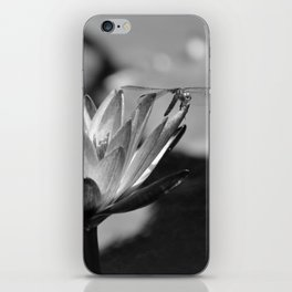 The Dragonfly and the Bee iPhone Skin