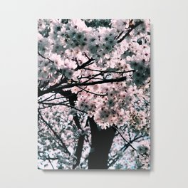 sakura shika nai Metal Print