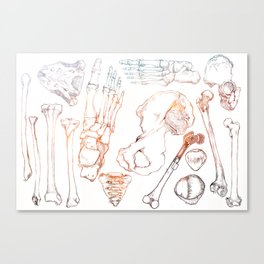 Lower Extremity Skeleton Canvas Print