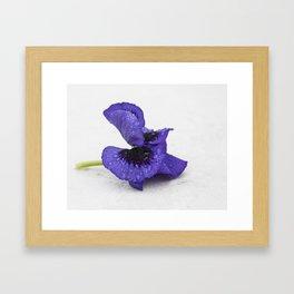 Violet spring dreams Framed Art Print