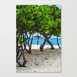 Through the Seagrapes Canvas Print