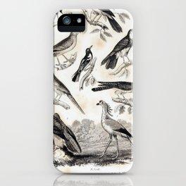 001 African Ox Pecker Noisy Roller Hen Harrier Red Throated Falcon Baltimore Oriole Red Headed Sawbill Kestrel Bearded Vulture9 iPhone Case