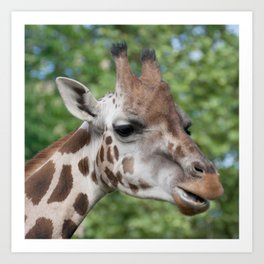 Lovely Giraffe Art Print
