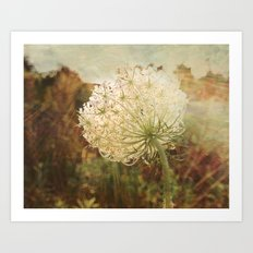 Queen Anne's Lace Sunset Art Print