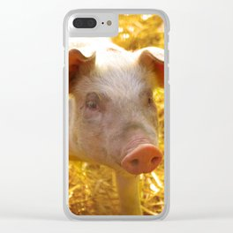 Happy piglet in the straw, country life pure Clear iPhone Case