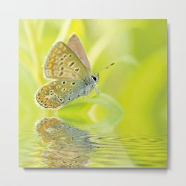 Zen Style Butterfly Over Calm Water Metal Print