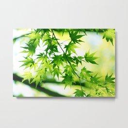 Lime Green Japanese Momiji Leaves Photography Metal Print