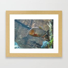 Fish 3 Framed Art Print