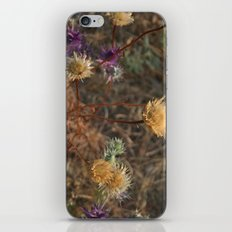 The Last Color of Fall iPhone & iPod Skin