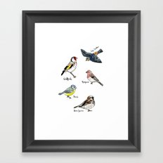 English Birds Framed Art Print