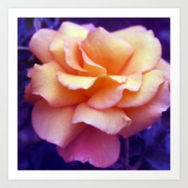 bed of roses: purple rose of cairo  Art Print